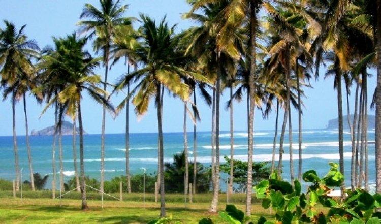 الشواطئ المنعزلة المهدبة مع بساتين جوز الهند في جزيرة ساوتومي