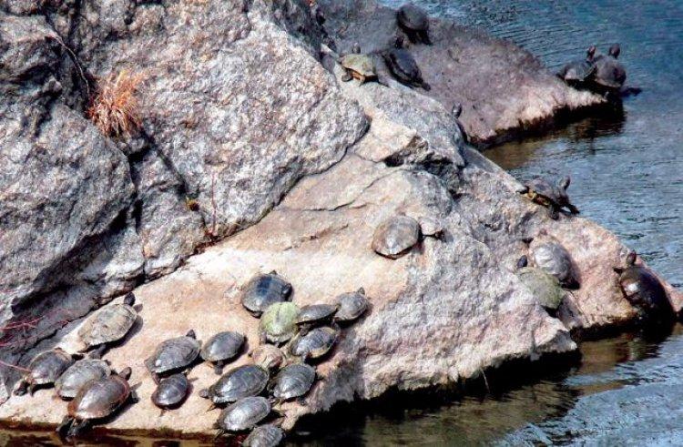 رأس الجنز محمية السلاحف في سلطنة عمان