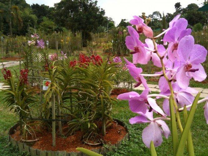 حدائق مانداى الأوركيد