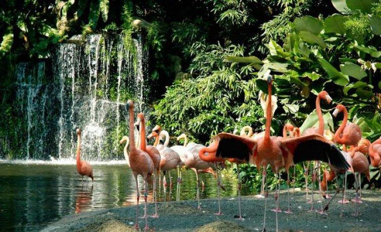 متنزه يورونغ للطيور