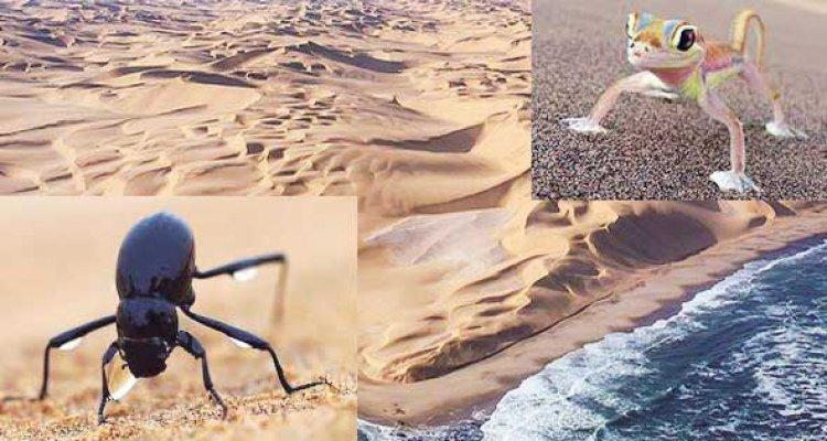 أمثله علي حيوانات الموجوده في ساحل الهياكل العظمية