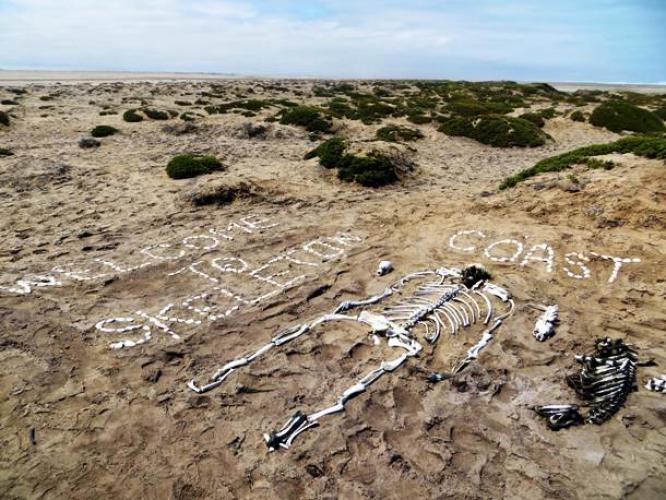 بقايا عظام في ساحل الهياكل العظمية في ناميبيا