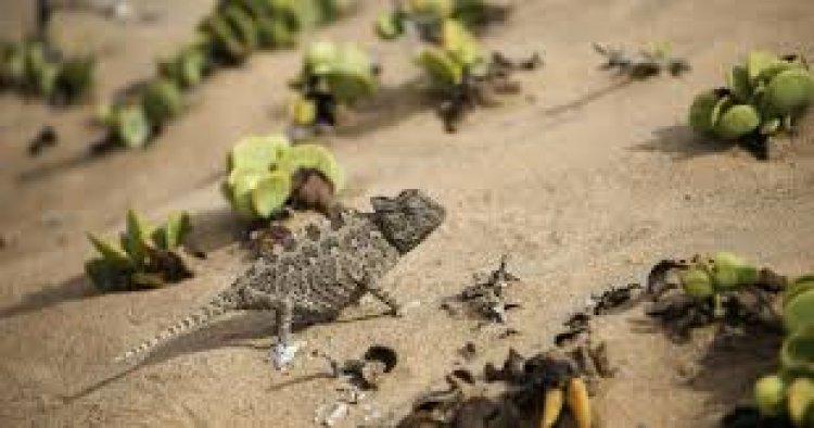 الطبيعة في ساحل الهياكل العظيمة