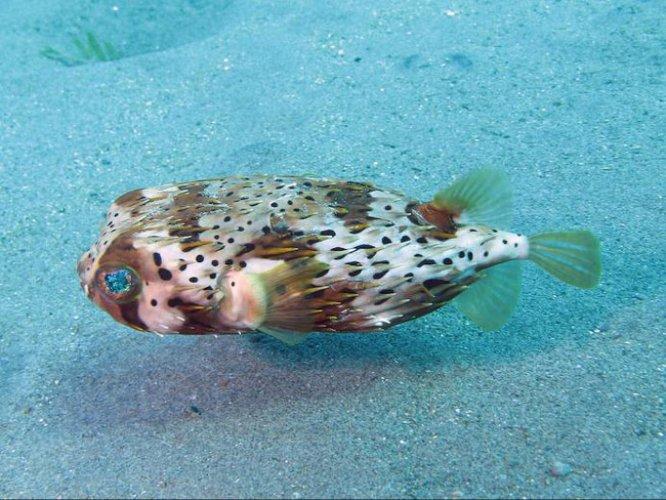 سمكة في مياه جزيرة مارتينيك