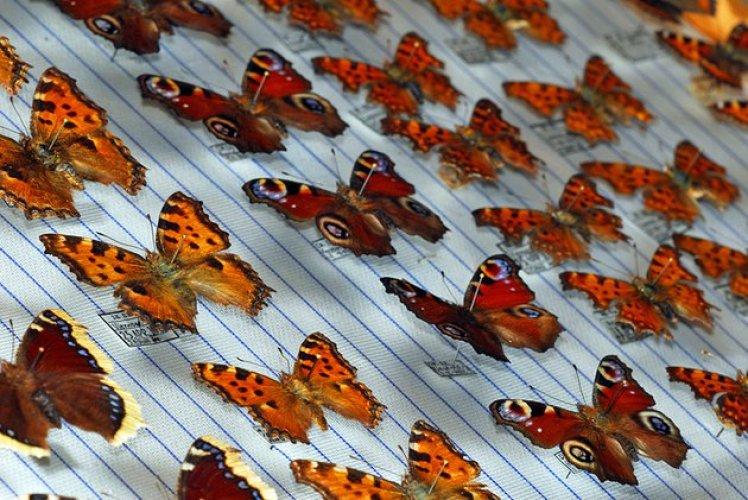 متحف الفراشات في سان تروبيه في فرنسا