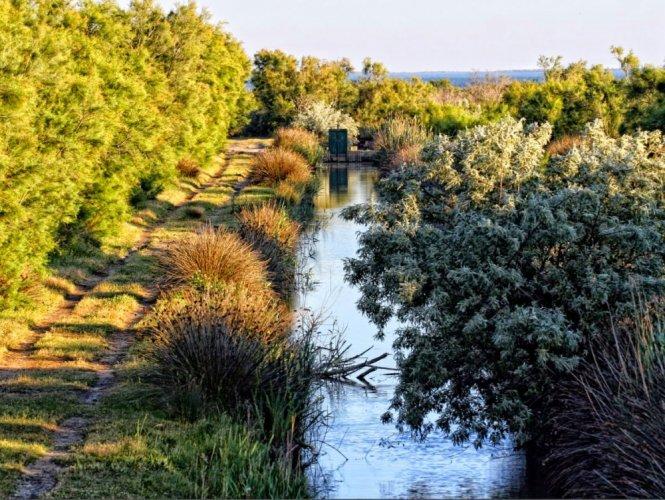 حديقة كارماغ الطبيعية الإقليمية Comargue Natural Regional Park