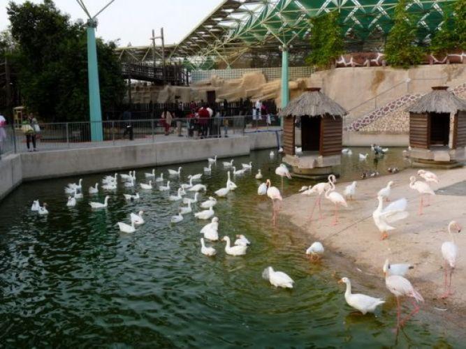 حديقة الحيوانات في الدوحة