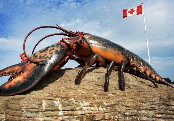شدياق وجراد البحر العملاق Shediac's Giant Lobster