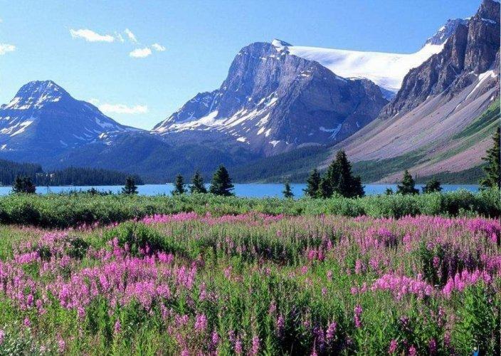 النباتات الملونة والغابات الكثيفة تغطي جبال روكي