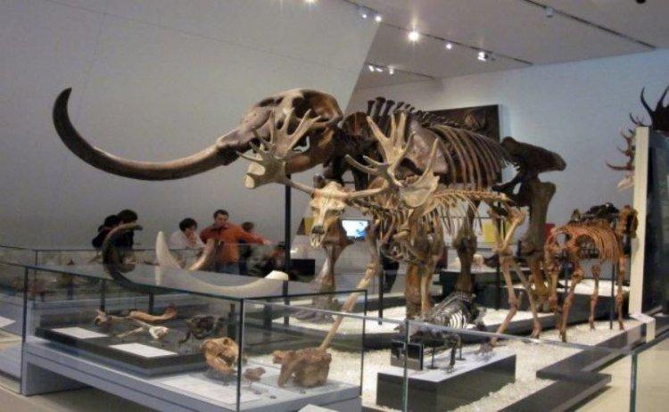 حفريات شبه كاملة للديناصورات في متحف اونتاريو الملكي