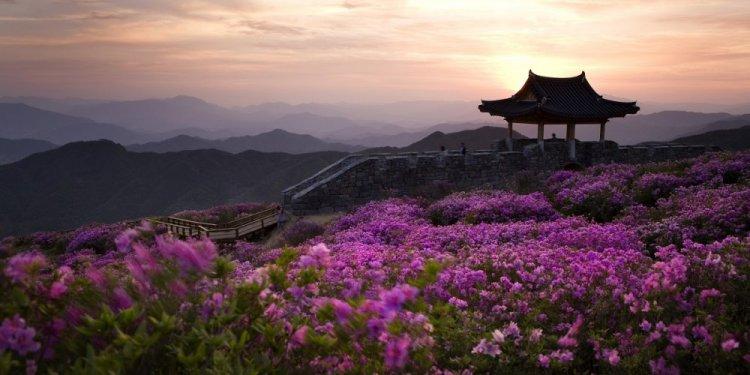 جزيرة جيجو في كوريا الجنوبية