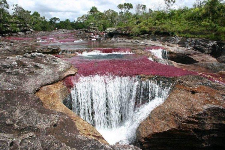 نهر كانيو كريستيلز في كولومبيا