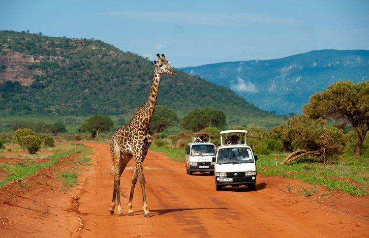 رحلات السفاري في حديقة أمبوسيلي الوطنية