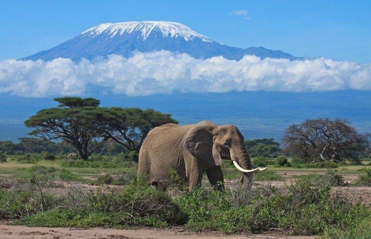 الطبيعة والاشجار والغابات والحيوانات في حديقة أمبوسيلي الوطنية