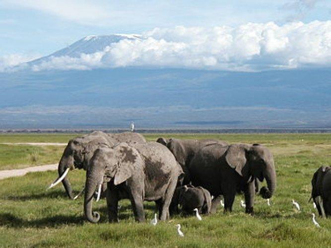 قطيع من الفيلة في حديقة أمبوسيلي الوطنية