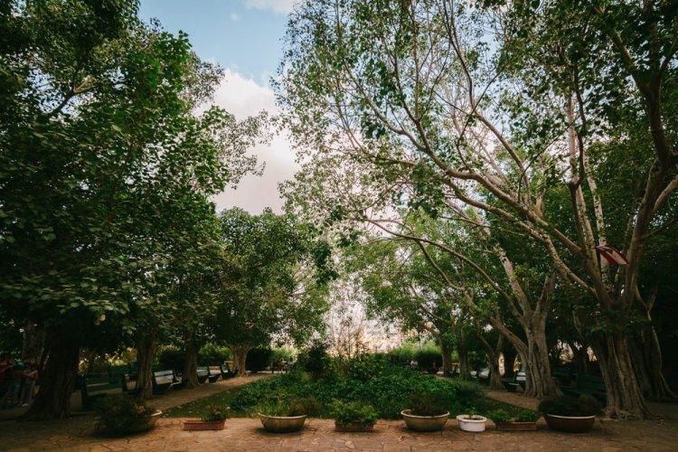 حديقة السيوفي