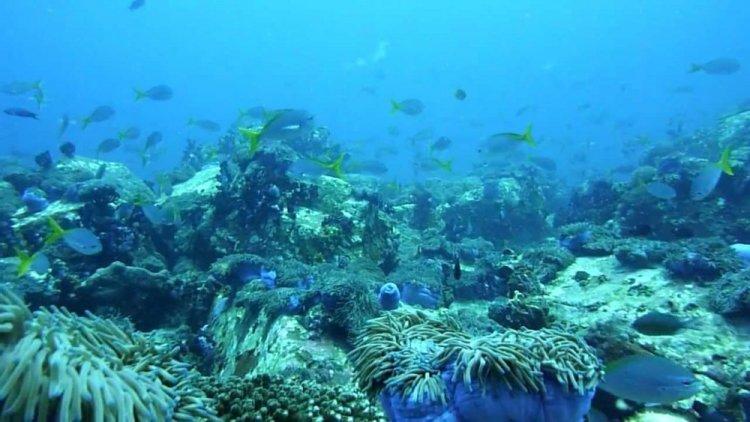 الحياة البحرية في تينجول