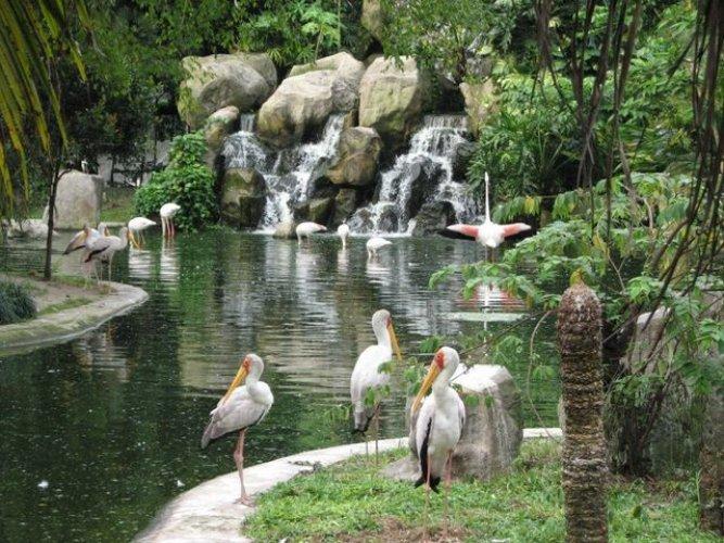 حديقة الطيور في ماليزيا
