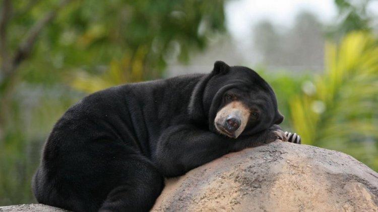 الدب في محمية وادي دانوم