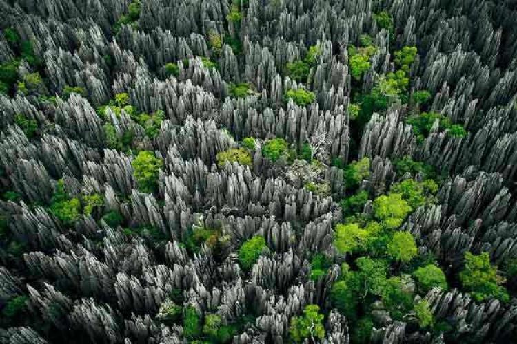 النباتات الخضراء تتغلل الصخور في الغابة الصخرية