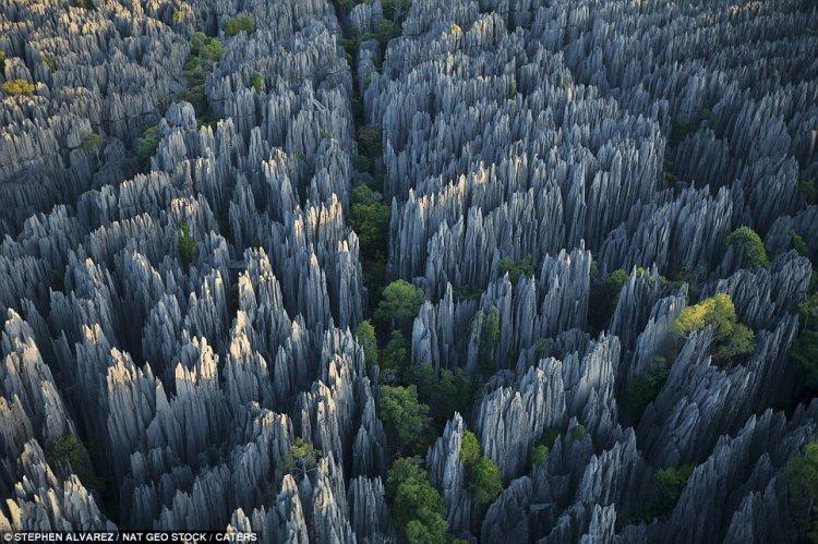 اللون الرمادى للصخور في الغابة الصخرية
