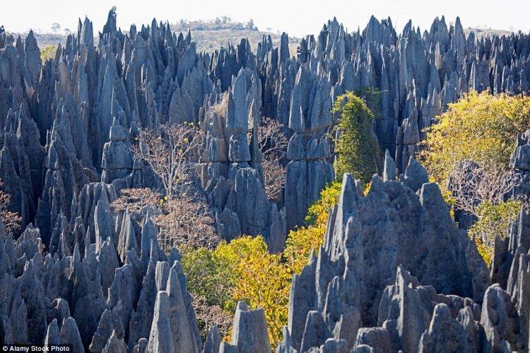الغابة الصخرية جراند تسينجي