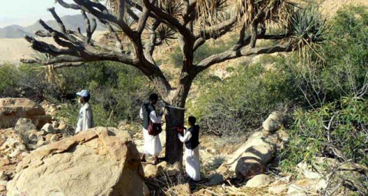 السكان المحليين في محمية جبل علبة حلايب