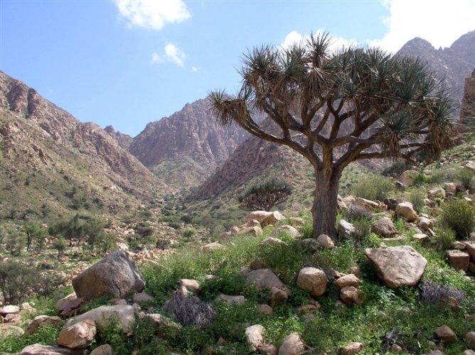 غابات طبيعية من المانجروف والحشائش المدارية الساحلية في محمية جبل علبة