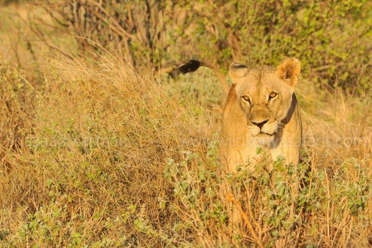 الحياة البرية في مومباسا