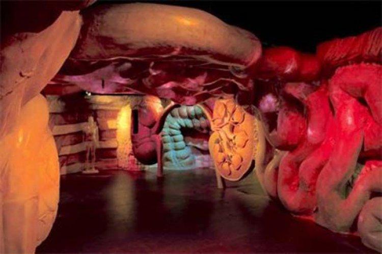 متحف جسم الانسان في هولندا