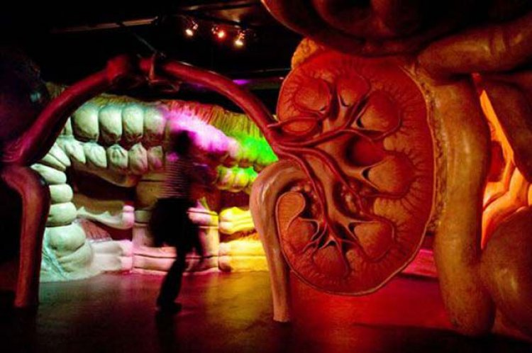 متحف كوربوس في أمستردام هولندا