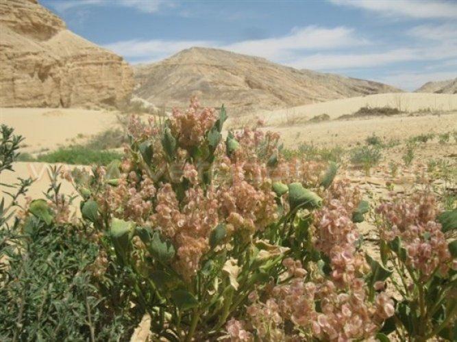 محمية وادي الأسيوطي - مصر