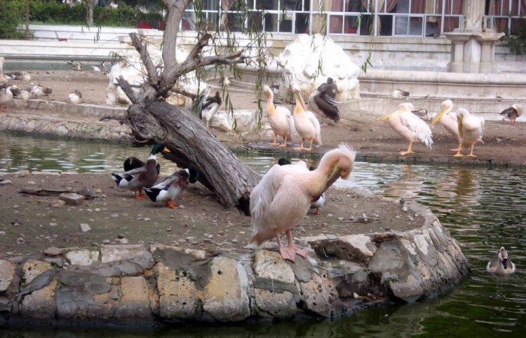 بحيرة البجع بالحديقة