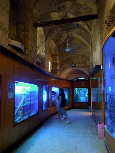 قلعة قايتباي بالانفوشي في الإسكندرية - مصر