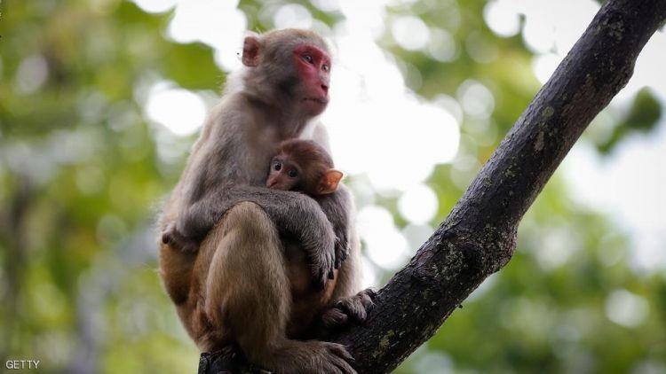 حديقة الحيوانات في باندونق - إندونيسيا