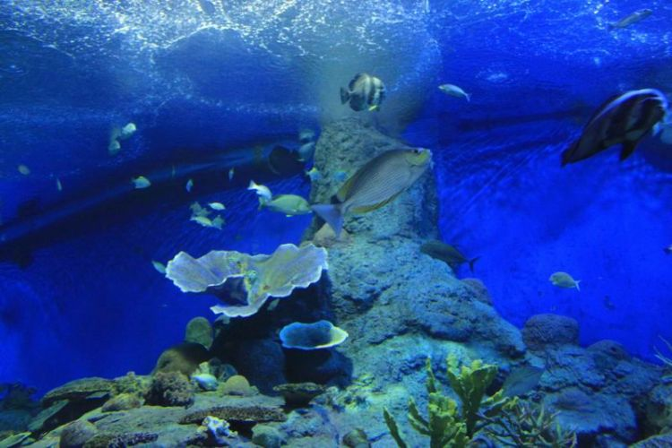 عبارة عن حوض اسماك عملاق يحتوي على غرف و انفاق