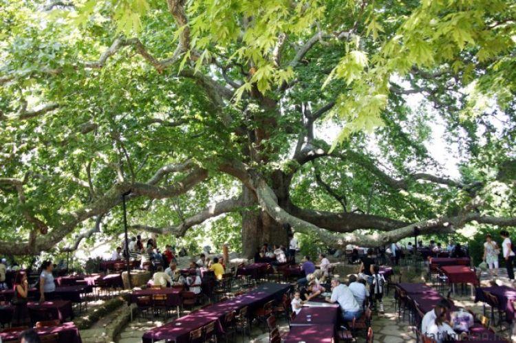 الشجرة التاريخية من اهم الاماكن التي يوصى بزيارتها