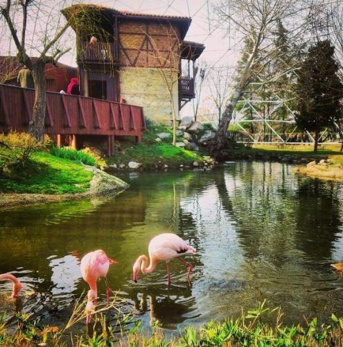 تضم حديقة حيوانات بورصة الذئاب والطيور الجارحة