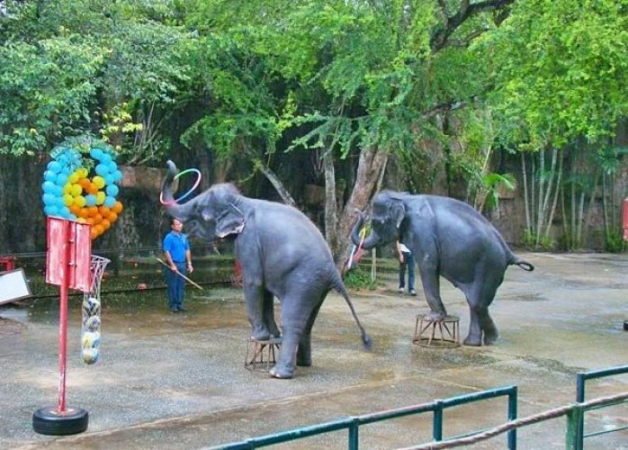 حديقة حيوان بوكيت - تالاند