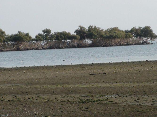 شاطئ بيش في جازان