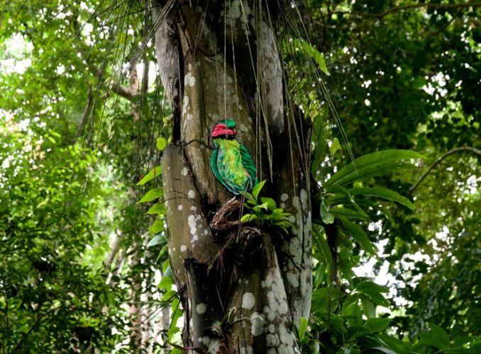 حديقة انداو رومبين في ولاية جوهور ماليزيا