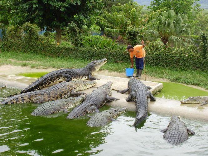 حديقة التماسيح في ماليزيا