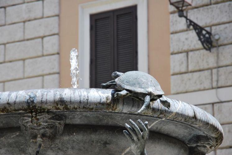 نافورة السلاحف في روما