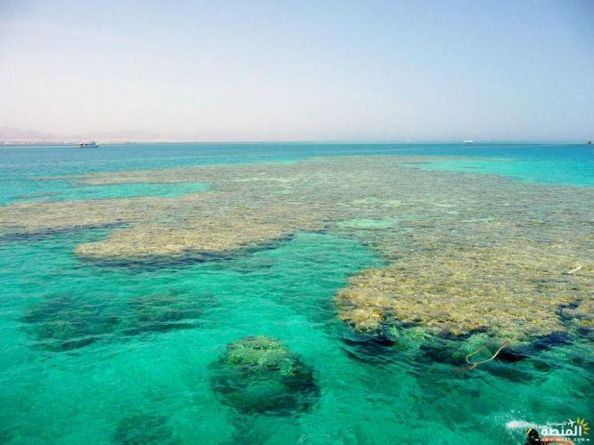 ساحل جزيرة تيران في شرم الشيخ - مصر