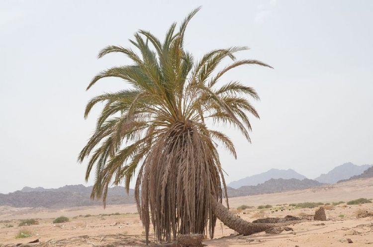 محمية نبق بشرم الشيخ