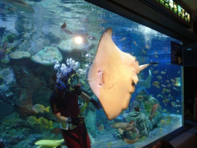 Sunshine Aquarium Tokyo