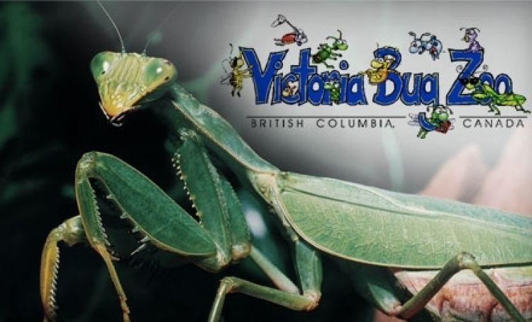 حديقة حشرات فيكتوريا