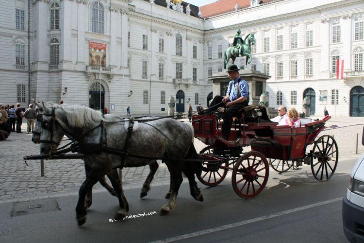 عربات الخيول في فيينا