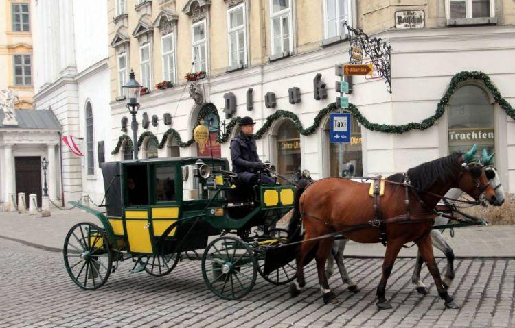عربات الخيول في فيينا - النمسا
