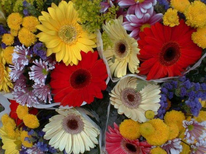 من زهور الحديقة